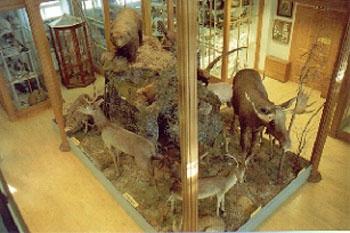 karro museum